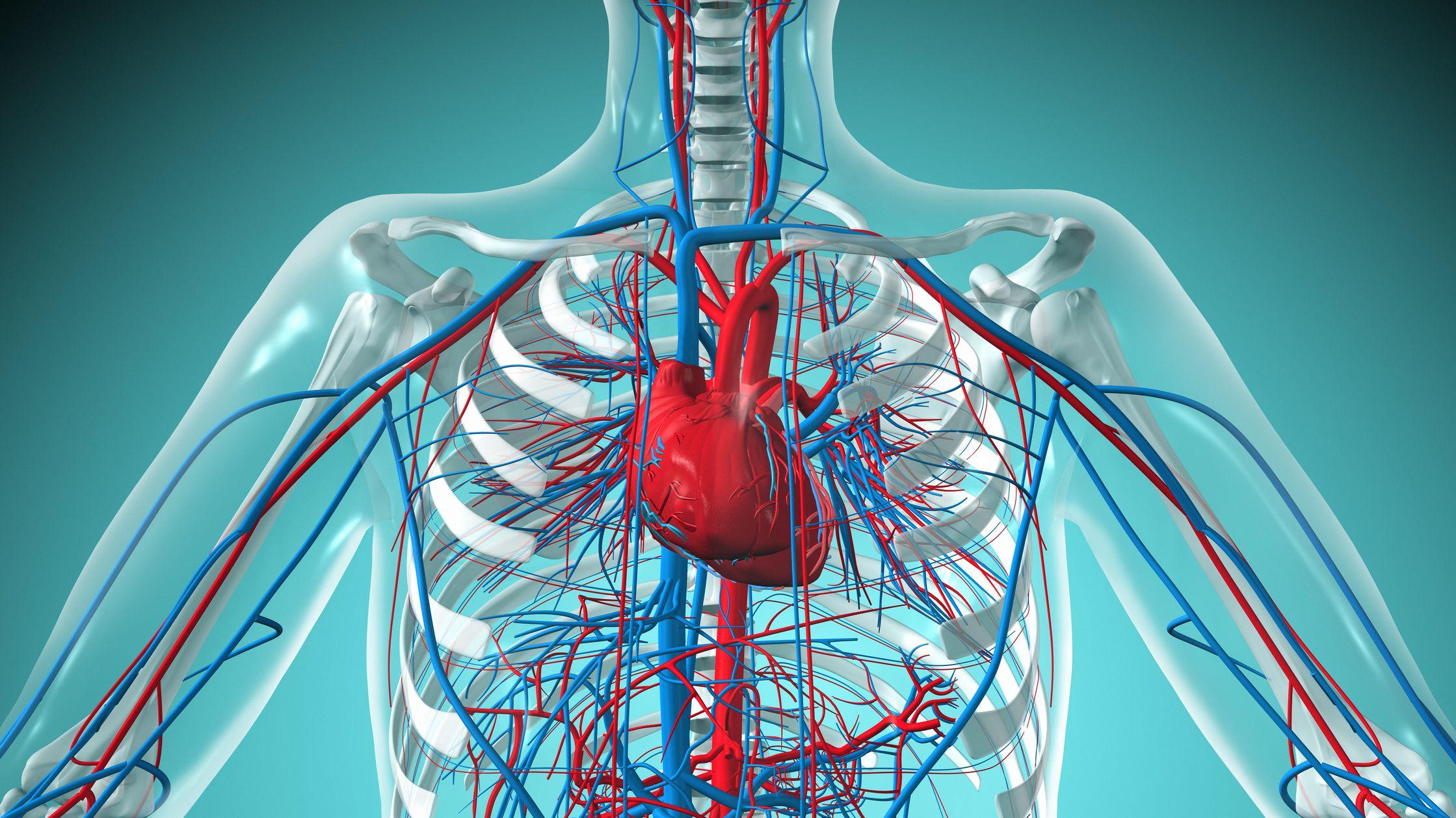 cardiovascular-avacen