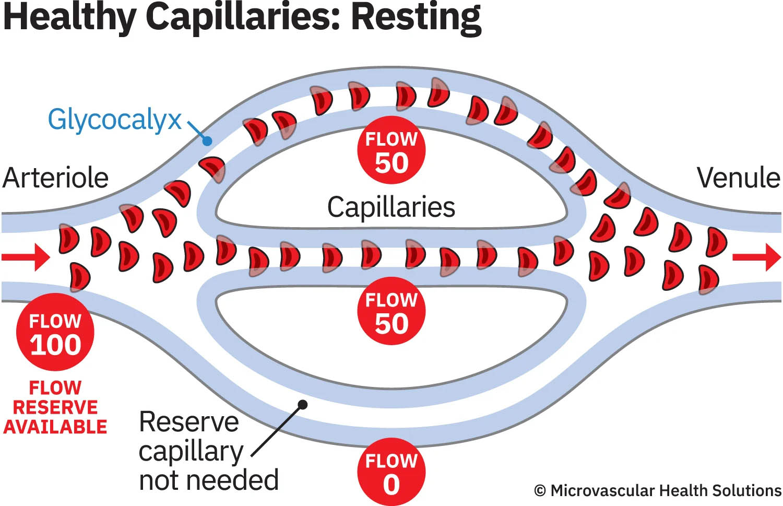 healthy capillaries resting